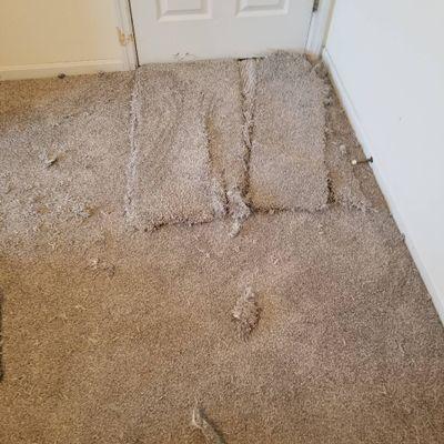 Avatar for Don Henize Carpet Repair
