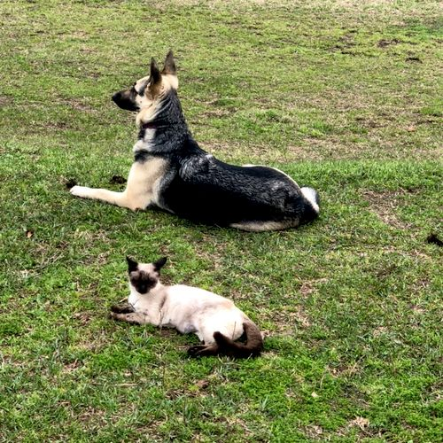 Dogs and cats can sometimes be friends