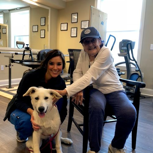 Training for pet therapy