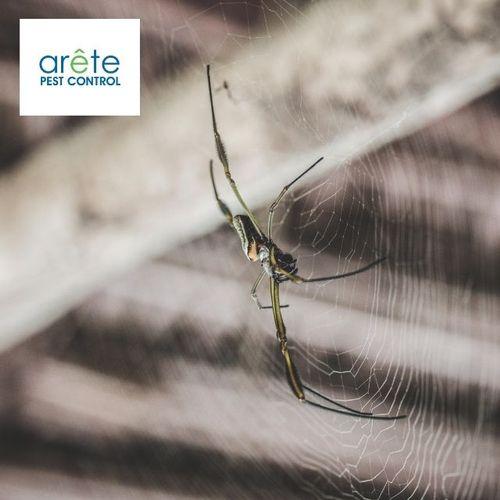 Spider Service