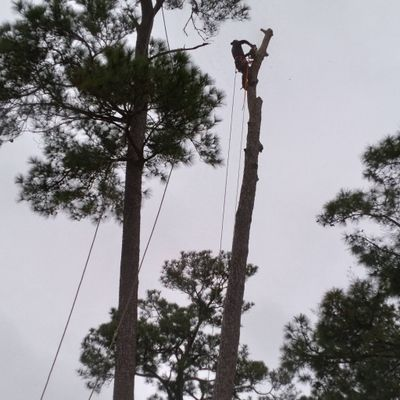 Avatar for Miguel Tree Services