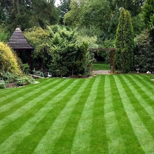 P&S Lawn Care and Maintenance