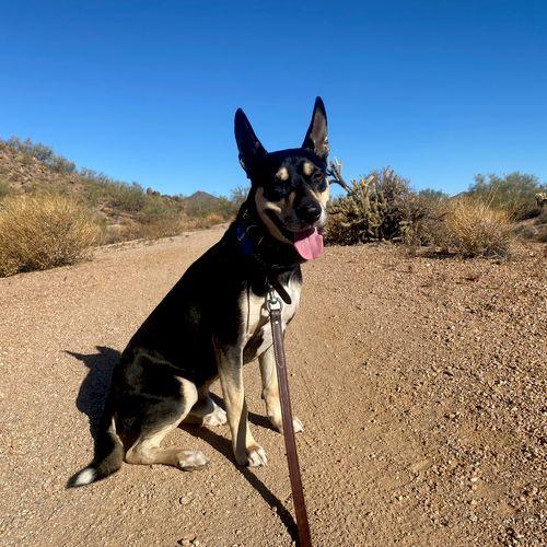 Hiking Buddy! (Pup - Obi)