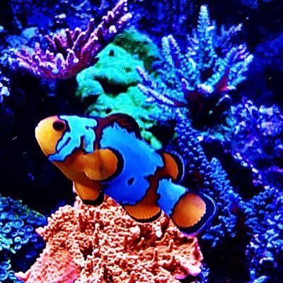 Avatar for CRS Aquarium Maintenance