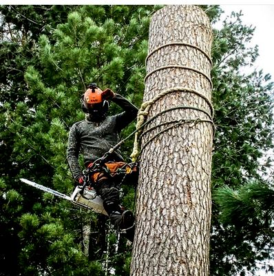 Avatar for Pro crew  tree service & landscaping