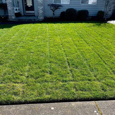 Avatar for Flórez lawn care maintenance