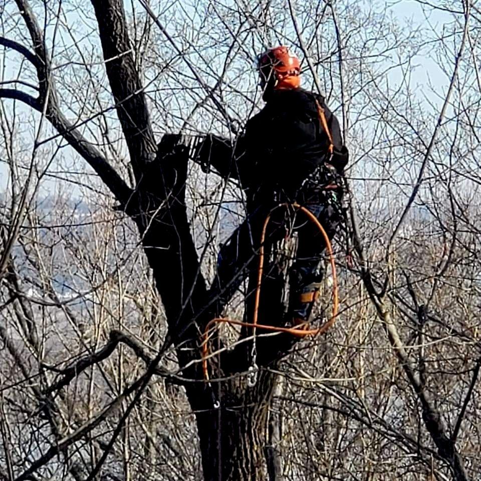 George's Tree Service