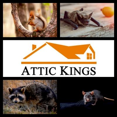 Avatar for Attic Kings Inc. (Animal Removal & Exclusion)