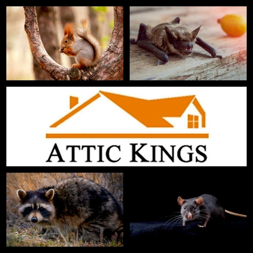 Attic Kings Inc. (Animal Removal & Exclusion)