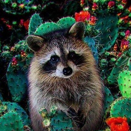 Cactus Pest LLC