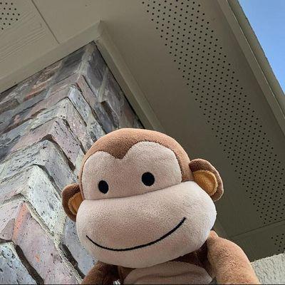 Avatar for Install Monkey