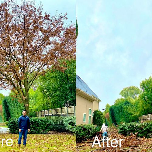 Before and after. Tree removal
