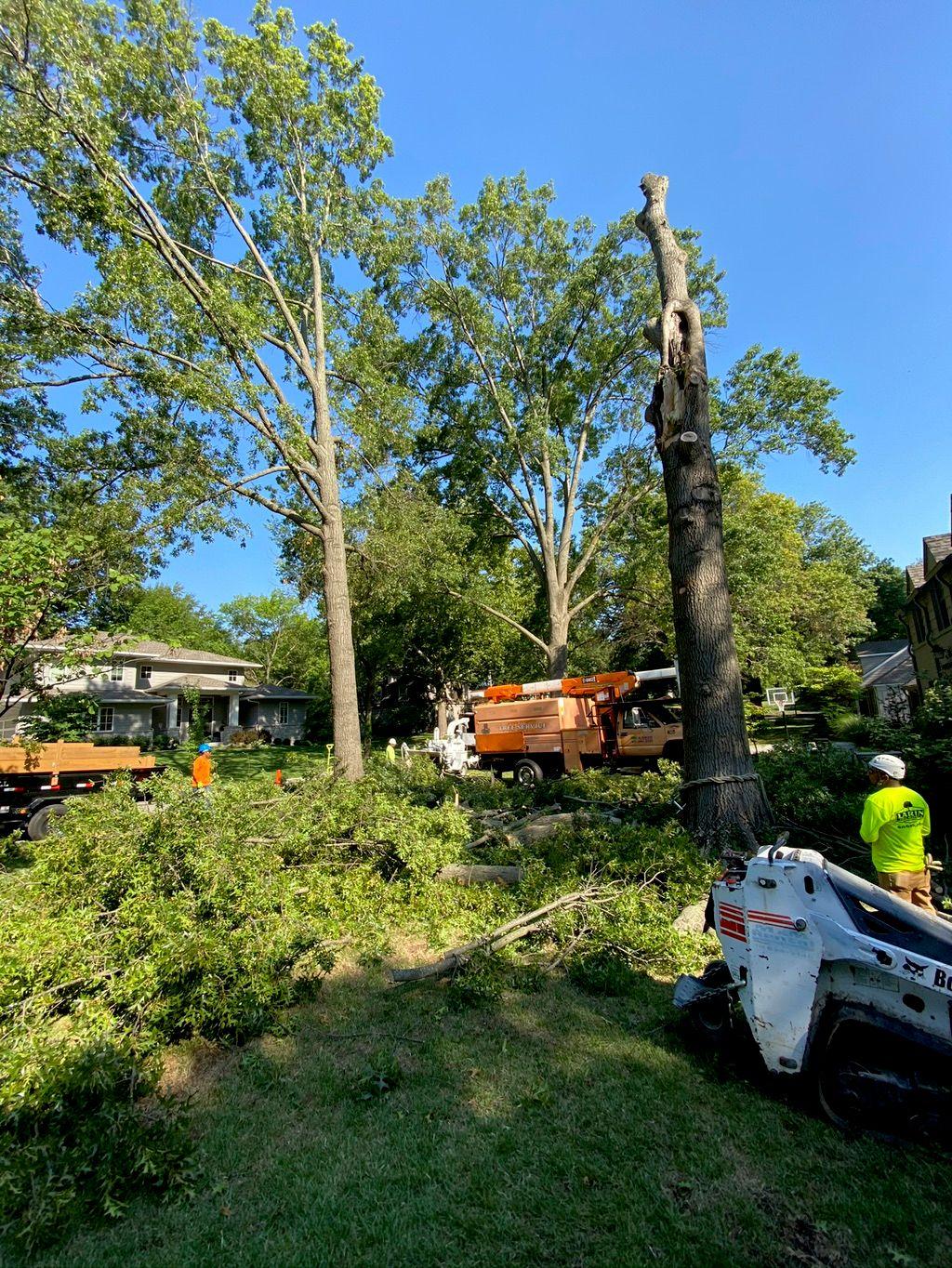 Larin tree service