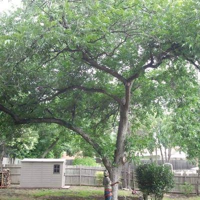 Avatar for True Tree Masters