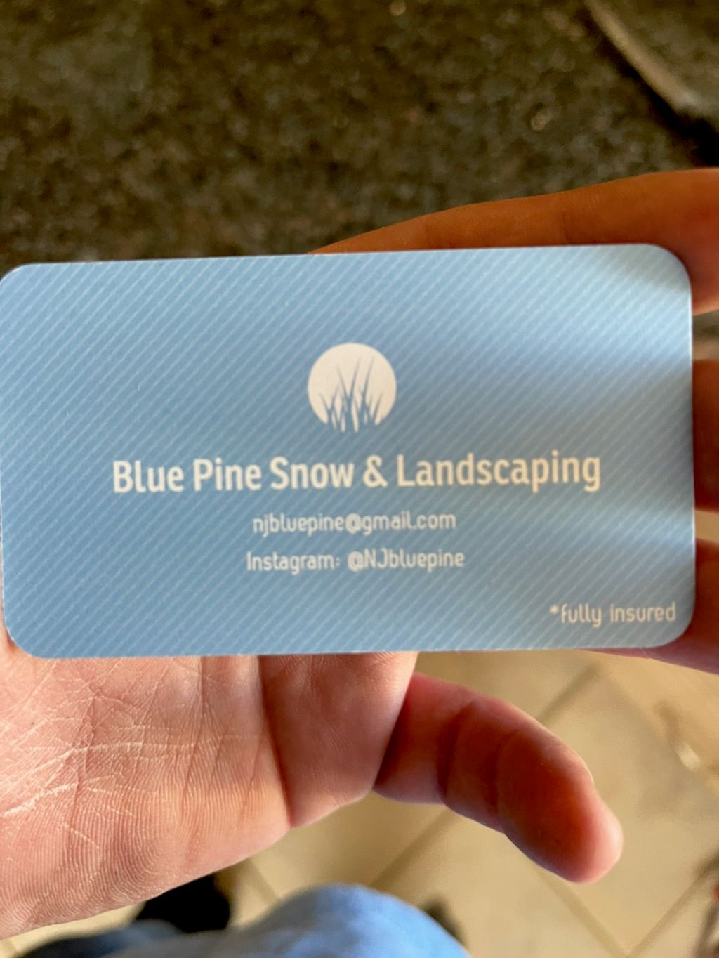 Blue pine snow & landscaping