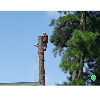 Avatar for Martinez Tree Service