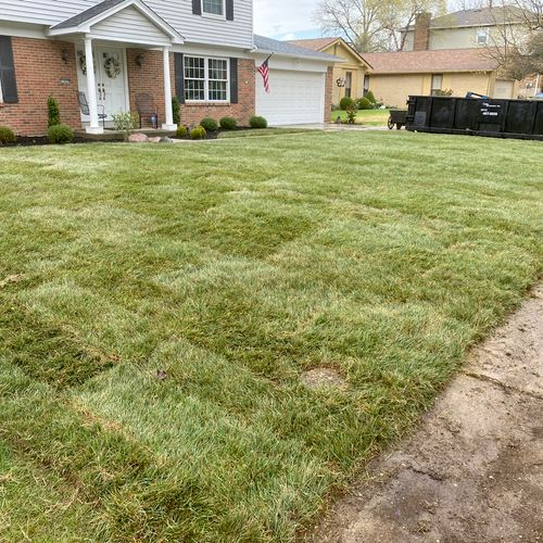 Sod Installation Tall Fescue grass