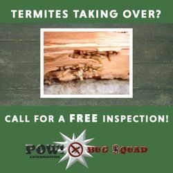 Termite Control. Contact us for a free inspection!