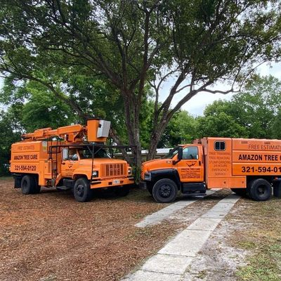 Avatar for Amazon Tree Care