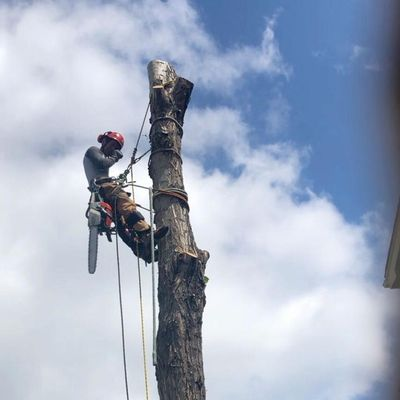 Avatar for MJ Economic Tree Service
