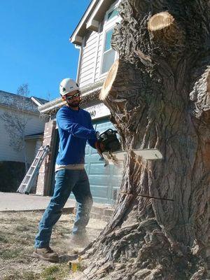 Avatar for Mack's Tree Care