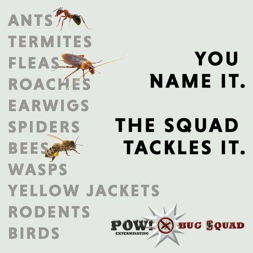 We offer a range pest control services