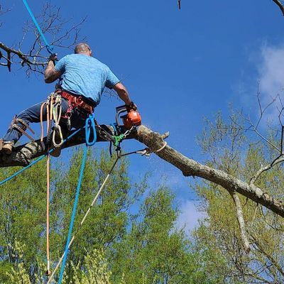 Avatar for Blue Oak Home Improvements