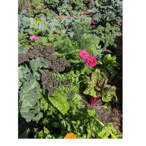 E-n-Us Garden...KALE YEA!!!