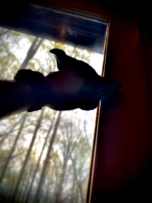 Buddy's window cleaning