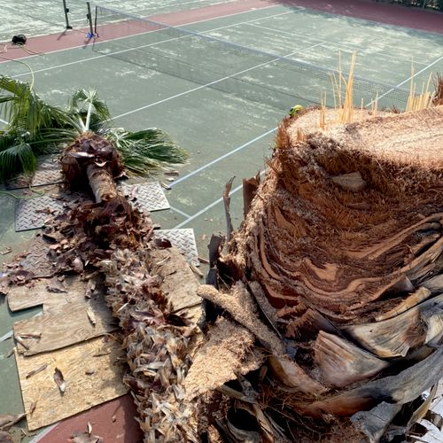 Palm tree removals