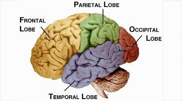Brain Stimulated Wellness