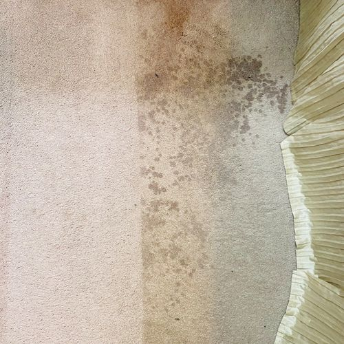 Carpet Cleaning-Halfway
