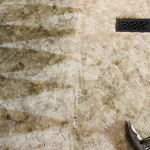 Shag Carpet Cleaning-Halfway