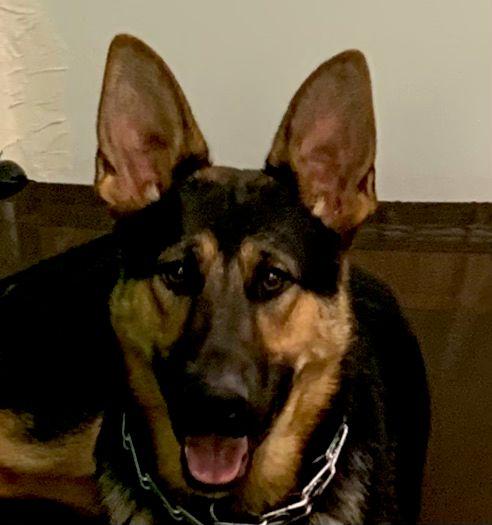 Miracle Dog Training