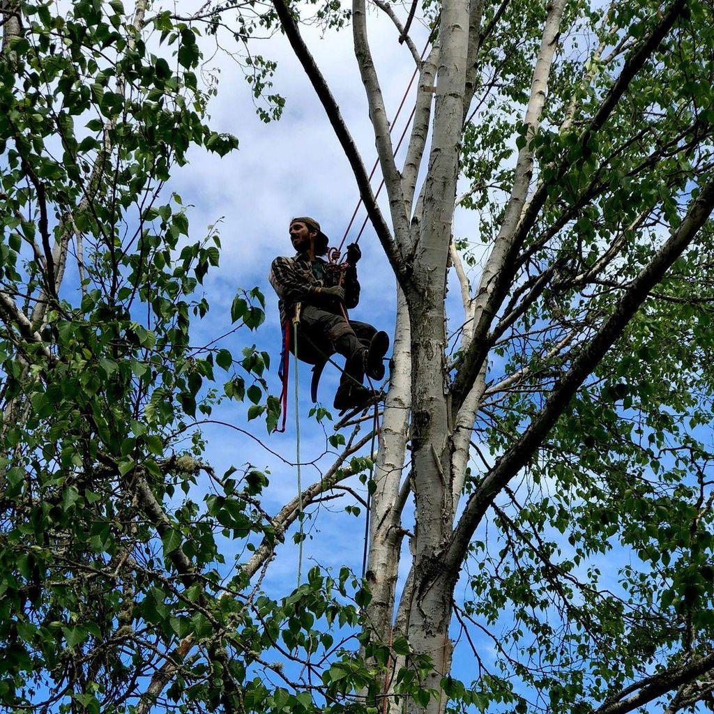 Tyler's Tree Trimming