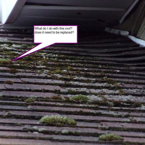 The sun and the humidity on your roof give it the first two. The third ingredient, nutrients.
