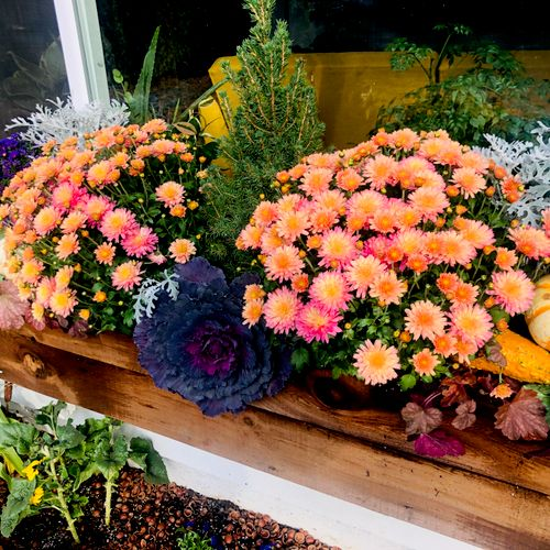 Custom built cedar window box and Fall arrangement featuring many recyclable perennials, and hazelnut shell mulch.