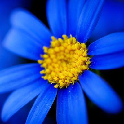 Avatar for BlueFlower Landscape Design