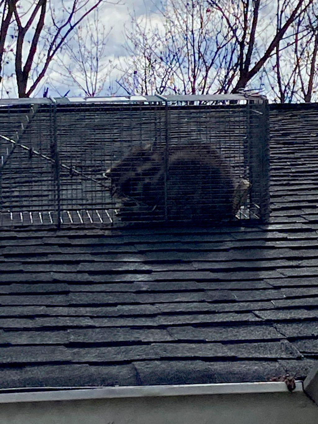 CMM Wildlife Removal LLC