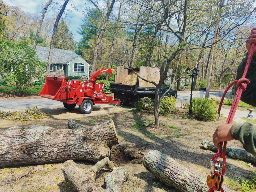 BE Green landscaping  trees service