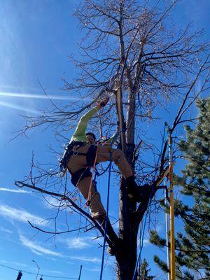 Avatar for Centennial tree care