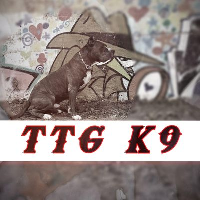 Avatar for Trained To Go Canine (TTG K9)