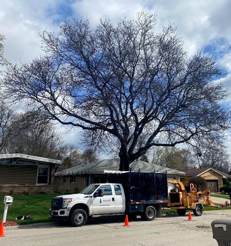 Palasz Tree Service
