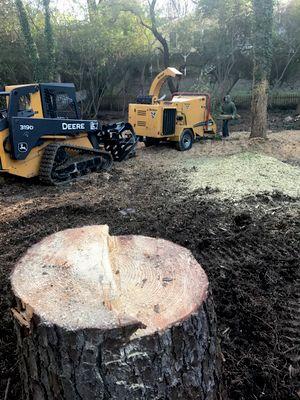 Avatar for Murueta's Tree Removal
