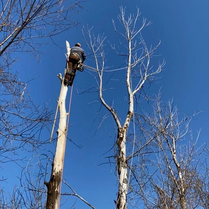 R & S AffordableTreeService