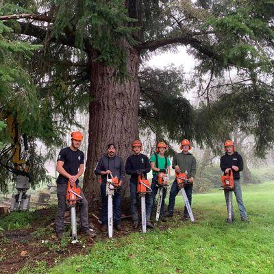 Avatar for Snohomish Tree Company