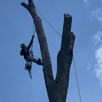 Avatar for K&C Tree Service