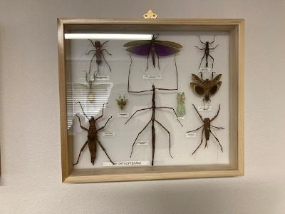 Cool bugs!!