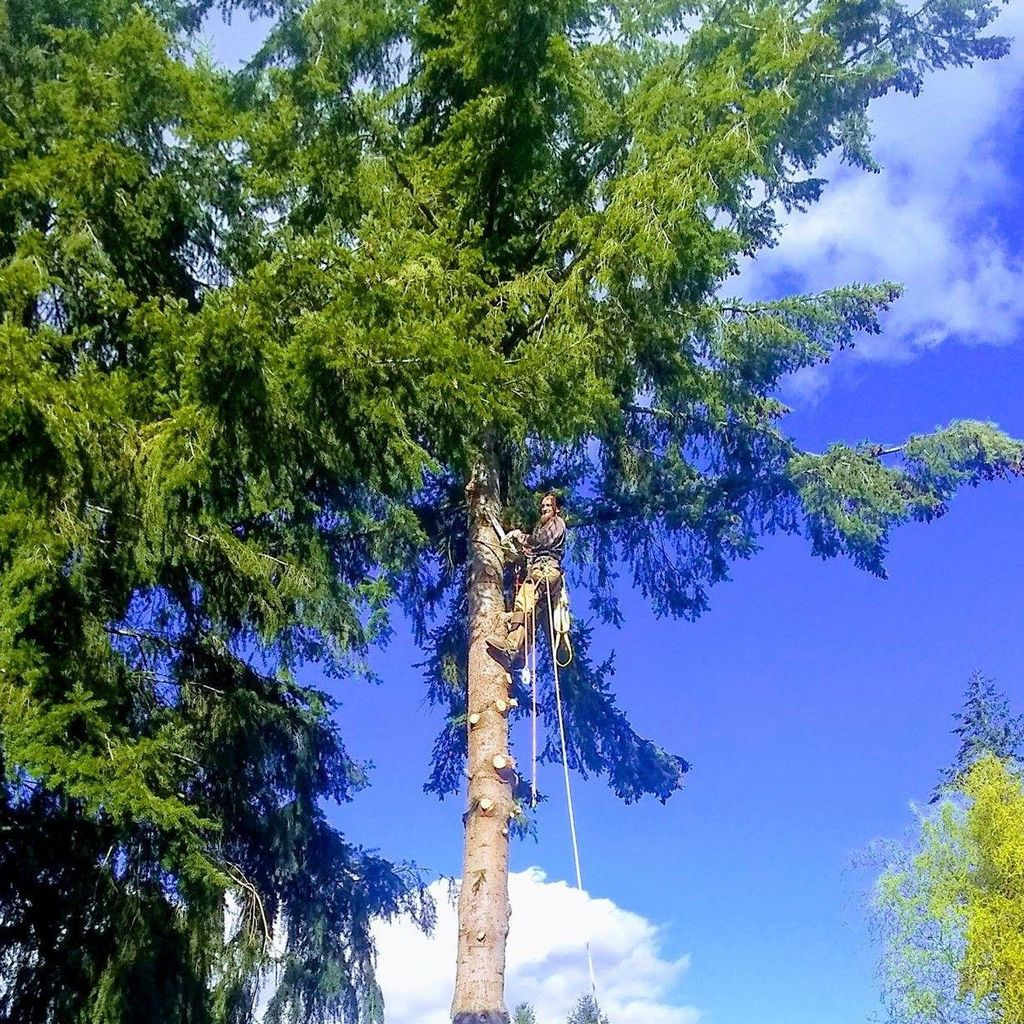 7th Generation's Tree Service