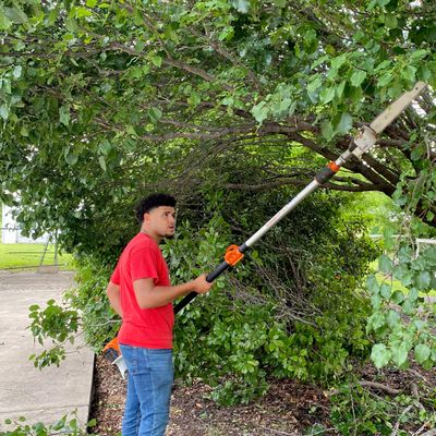 Avatar for Cameron's Tree Service